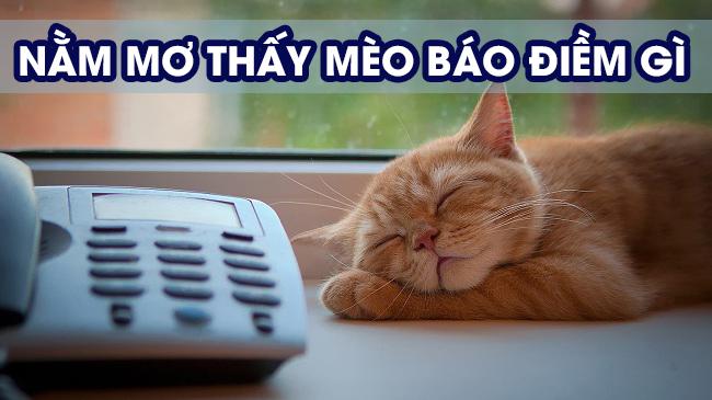 Mơ thấy mèo điềm báo điều gi