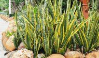 Tuổi Tân Mùi hợp cây gì theo phong thủy ngũ hành năm 2020?
