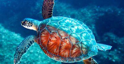 Mơ thấy rùa là điềm báo lành hay dữ?
