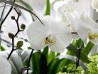 Mơ thấy hoa lan đánh con gì điềm báo gì?